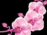 цветы (197)