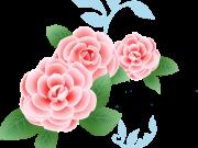 цветы (201)