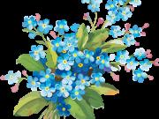 цветы (211)