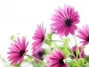 цветы (214)