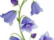 цветы (216)