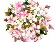 цветы (217)
