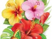 цветы (218)