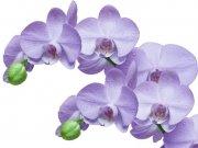 цветы (227)