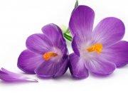 цветы (242)