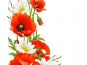 цветы (255)