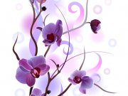 цветы (258)