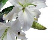 Фотопечать на потолке: Цветы 1