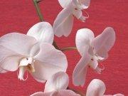 Фотопечать на потолке: Цветы 106
