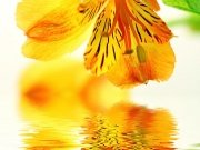 Фотопечать на потолке: Цветы 112