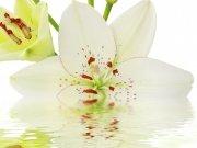 Фотопечать на потолке: Цветы 113