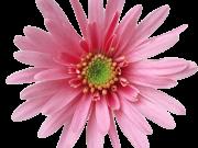 Фотопечать на потолке: Цветы 117