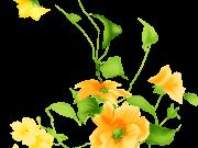 Фотопечать на потолке: Цветы 118