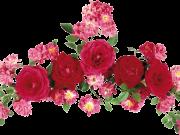 Фотопечать на потолке: Цветы 12