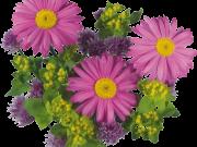 Фотопечать на потолке: Цветы 120