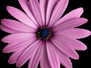 Фотопечать на потолке: Цветы 121