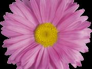 Фотопечать на потолке: Цветы 123