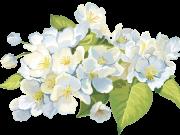 Фотопечать на потолке: Цветы 124