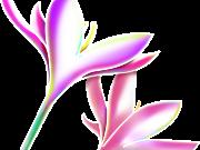 Фотопечать на потолке: Цветы 127