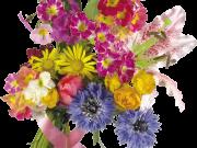 Фотопечать на потолке: Цветы 128