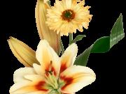 Фотопечать на потолке: Цветы 134