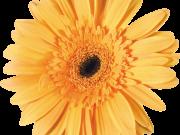 Фотопечать на потолке: Цветы 137