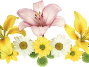 Фотопечать на потолке: Цветы 145