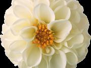 Фотопечать на потолке: Цветы 151