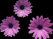 Фотопечать на потолке: Цветы 18