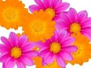 Фотопечать на потолке: Цветы 20