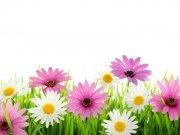 Фотопечать на потолке: Цветы 21