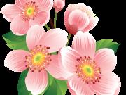Фотопечать на потолке: Цветы 23