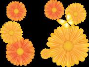 Фотопечать на потолке: Цветы 26