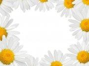 Фотопечать на потолке: Цветы 3