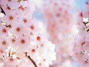 Фотопечать на потолке: Цветы 33