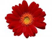 Фотопечать на потолке: Цветы 38