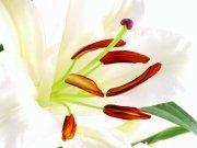 Фотопечать на потолке: Цветы 49