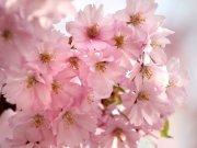Фотопечать на потолке: Цветы 53