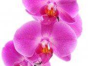 Фотопечать на потолке: Цветы 54