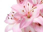 Фотопечать на потолке: Цветы 59