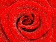 Фотопечать на потолке: Цветы 6