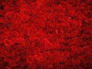 Фотопечать на потолке: Цветы 60