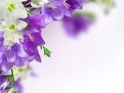 Фотопечать на потолке: Цветы 67