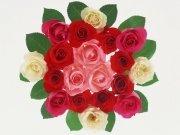 Фотопечать на потолке: Цветы 73