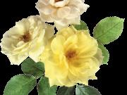Фотопечать на потолке: Цветы 76