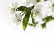 Фотопечать на потолке: Цветы 8