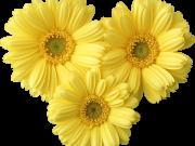 Фотопечать на потолке: Цветы 81