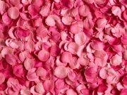 Фотопечать на потолке: Цветы 97