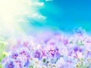 Фотопечать на потолке: Цветы 98