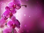 Фотообои на стену: Цветы 15